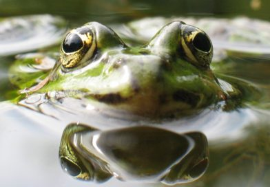 Mike Brandly: What auctions have always been … boiling frogs